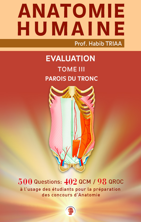 Evaluation d'anatomie des parois du tronc