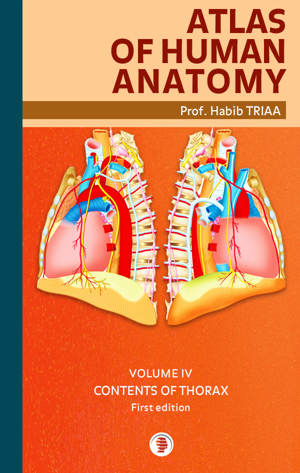 Atlas of anatomy of the contents of thorax